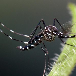Rejestracja szczepionki przeciwko gorączce denga w Europie